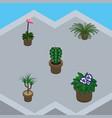 isometric flower set of grower houseplant peyote vector image vector image