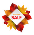 autumn sales banner with colorful leaves vector image