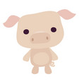 cute piggy on white background vector image