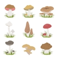 Different Mushrooms Realistic Drawings Set vector image