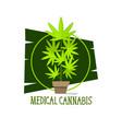 marijuana plant green line symbols on white vector image