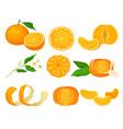orange mandarin fruit unpeeled and skinless vector image vector image
