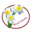 spring flower narcissus for cosmetics logo vector image vector image