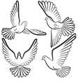 Black and white contours of four pigeons that fly vector image vector image