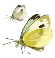 Butterfly with yellow wings insect vector image vector image