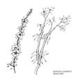 hand drawn set sakura and bamboo vector image