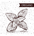 oregano herb and spice label engraving vector image vector image