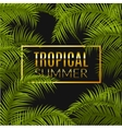 Tropical summer design poster template Summer vector image vector image