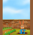 a rabbit digging a hole next to farm vector image vector image