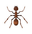 ant or termite in flat style vector image