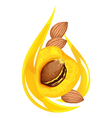 apricot kernel oil stylized drop vector image vector image
