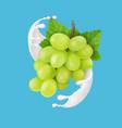green grape branch in yogurt or milk splash vector image vector image