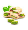 Pistachios nuts isolated on white vector image vector image