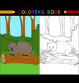 cartoon wombat coloring book vector image vector image