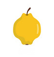 quince icon flat style vector image vector image