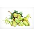 Watercolor painting grapes vector image