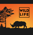 wild life vector image vector image