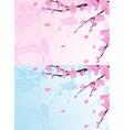Asian background sakura cherry blossoms vector image