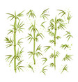 bamboo leaves stems vector image