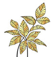 decoration leaves vector image vector image
