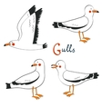 Hand drawn seagulls collection vector image