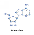 Adenosine is a purine nucleoside vector image