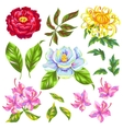 China flowers set Bright buds of magnolia peony vector image
