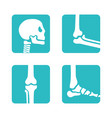 set orthopedic and skeleton bones symbols vector image