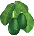 avocado branches vector image vector image