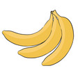 banana hand drawn sketch vector image