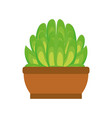 cartoon cactus in a pot vector image vector image