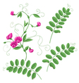 vetch vector image