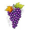 watercolor fruit grapes branch vector image