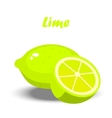 fresh lime and slice vector image vector image