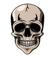 skull head mascot logo desain vector image