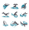 whale among sea waves and splashes icon set vector image