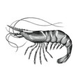 antique engraving shrimp black and white clip vector image