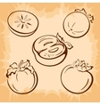 Fruits Persimmon Pictograms vector image vector image