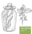 Panax Ginseng Root Plant vector image vector image