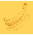 Banana Menu Engraved Sketch vector image