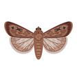 cartoon exotic moth vector image