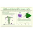 endocannabinoids and immune system horizontal vector image vector image