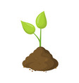 green sprout in ground isolated on white vector image