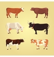 Set of different cows isolated vector image vector image
