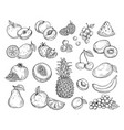 sketch fruits strawberry melon peach mango vector image
