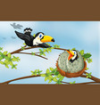 toucan birds on the nest vector image vector image