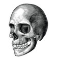 Antique human skull vintage engraving isolated