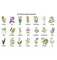 best herbs to grow in your medicinal garden vector image vector image