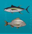common tune and seabream vector image vector image