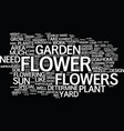 great flower garden design simple steps part text vector image vector image